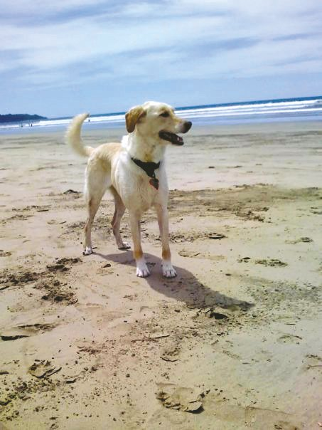Robin's reliable companion Lucy on the beach in Costa Rica.