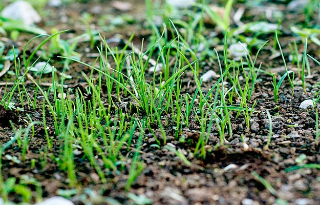 Garden6.jpg.jpe