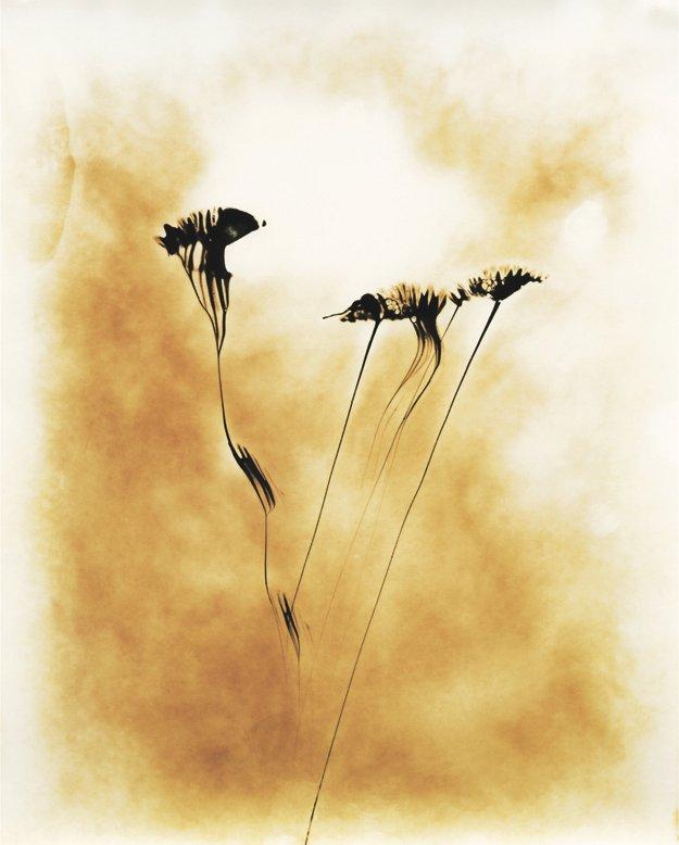 Flower for a Yogi 1
