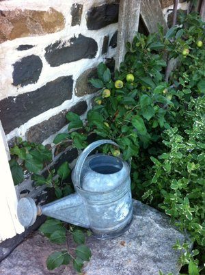 watering-can.jpg.jpe