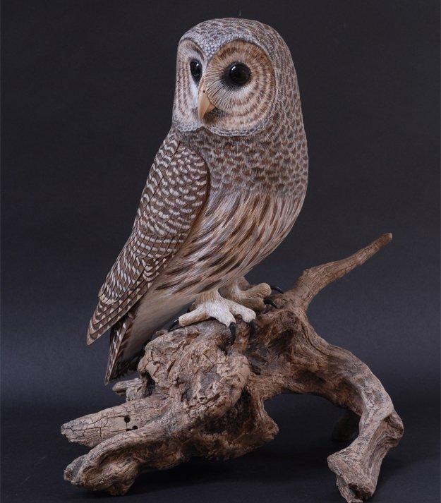 23053-1-Barred-Owl.jpg.jpe
