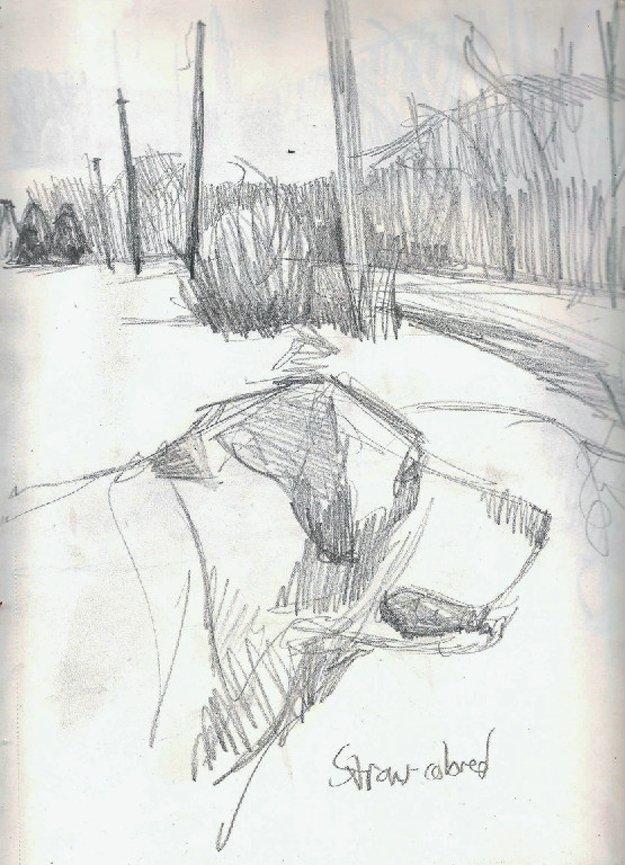 26462-sketchbook3.png