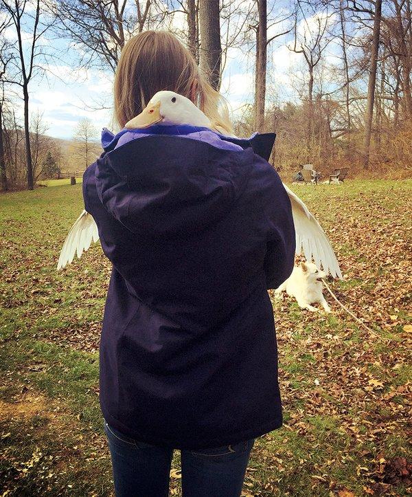 Lilly--Duck.jpg