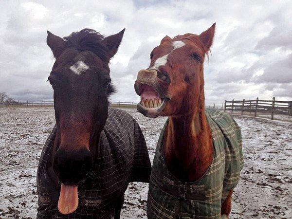 Tango-and-No-Name--Horses.jpg
