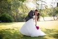 Groom dipping and kissing bride on grassy field, shaded by a tree