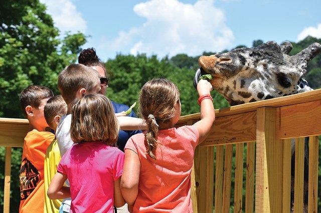 Feeding a giraffe at the Lehigh Valley Zoo