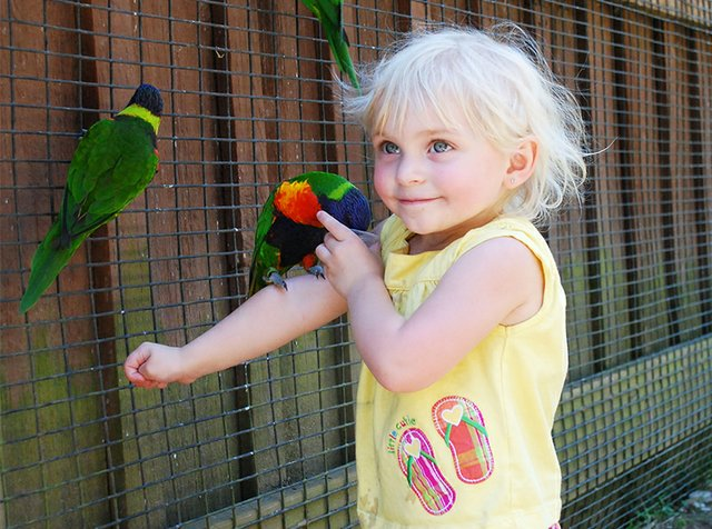 Lorikeets at the Lehigh Valley Zoo