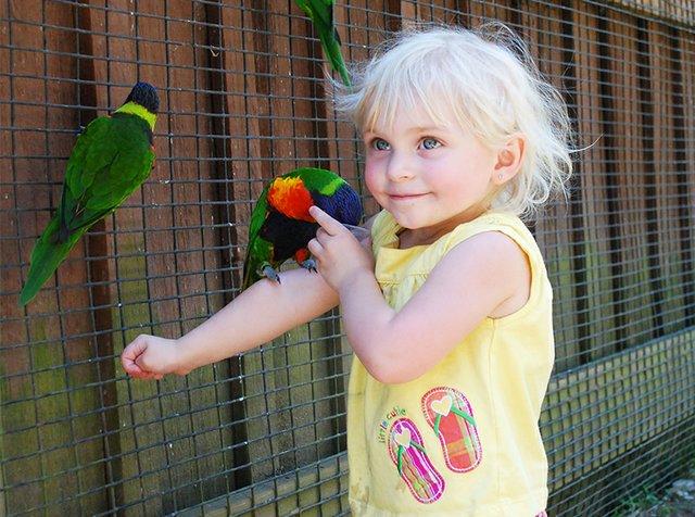 Lorikeets at the Lehigh Valley Zoo