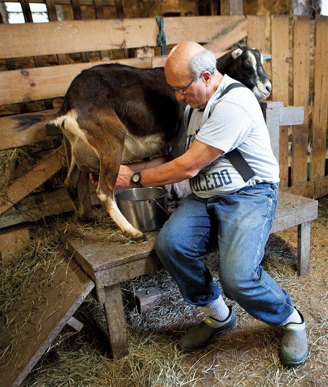 goat milking at Oleksa Farm
