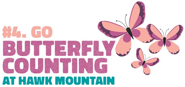 #4. Go butterfly counting at Hawk Mountain
