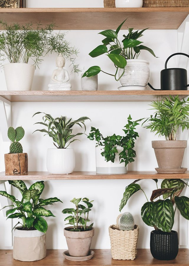 plant-shelf-web.jpg