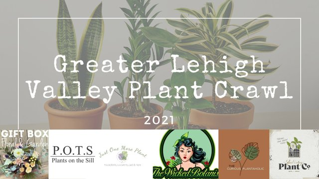 Plant Crawl.jpg