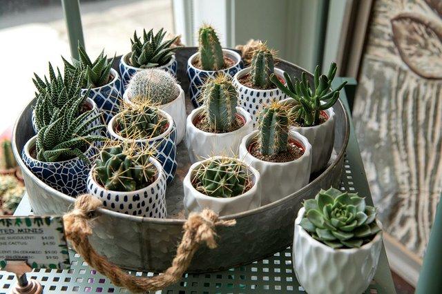 learke-cacti-web.jpg