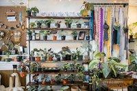 wicked-botanist-81-web.jpg