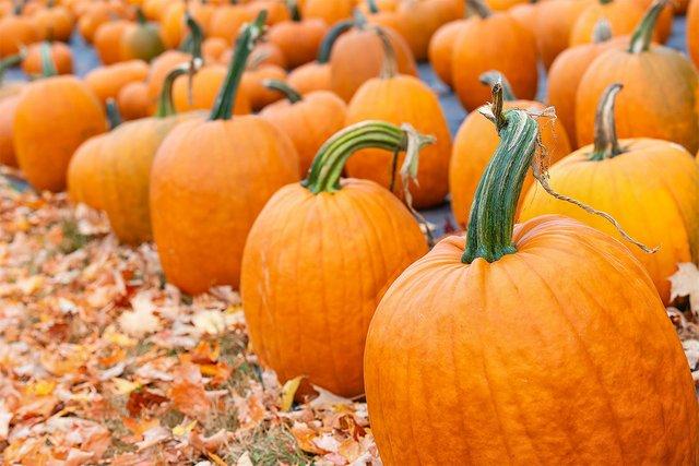 pumpkin-patch-hero.jpg